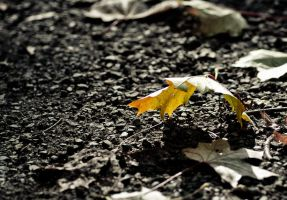 It's Fall - leaf on the ground by uncloned