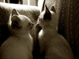 Siamese Kittens by Ritty