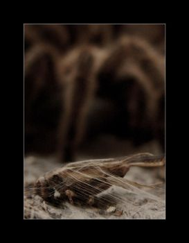 The Spider's Burrow 3 by revxus