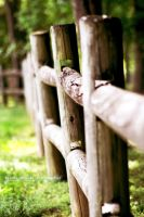 Fence by DaggarHeart