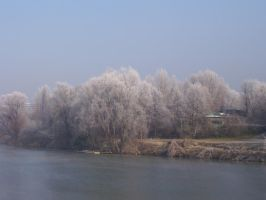 Frosty trees by xinh