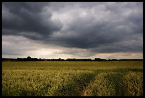 Wheatfield in Norfolk II by grimleyfiendish