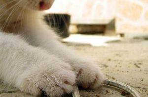 paws... by puszika
