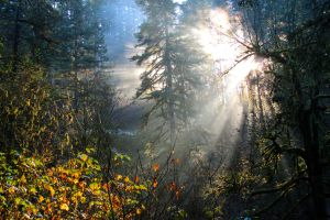 the light through the trees by ringmale