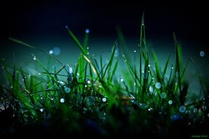 Tungsten Dew by George---Kirk