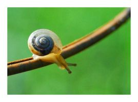 Snail 1 by selley