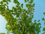 Bright Green Leaves by FPS-Princess