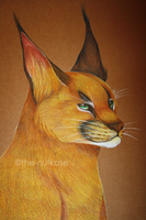 Caracal by The-Nutkase
