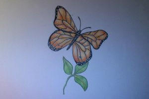 Colour Drawing Butterfly by SarahStar123