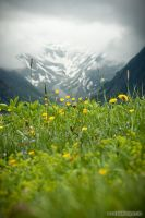alpine meadow by Springstein