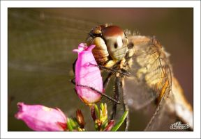 It's my Flower by sG-Photographie