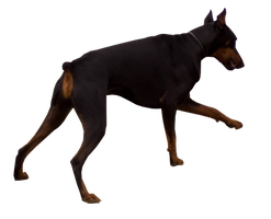 Precut Doberman Pinscher by Vesperity-Stock