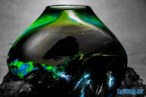 Fishbowl Disco by Dossium