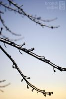 Iced Branches by Strange-1