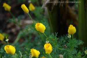 Yellow Flowers with drops by SarahDank