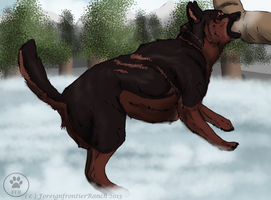 Say Goodbye To Winter Show - Schutzhund - Rache by ForeignFrontierRanch