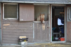 Horse Stock: Stable by thevirtualgaucho