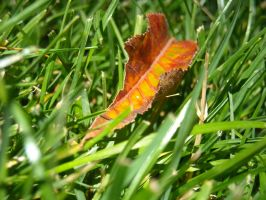 leaf in the grass by ZanderKahdoma