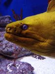 Moray Eel checking you out by winterface