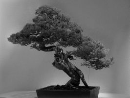 Bonsai Photo by allnew