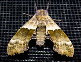 Summer Moths by aydonis