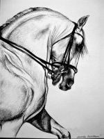 Drawing Horse I. by Ennete