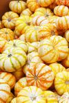 Baby Pumpkins by Scooby777
