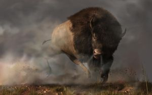 Charging Bison by deskridge