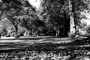 Platt Park. Monochrome. by johnwaymont