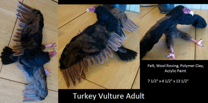 Turkey Vulture Adult by DancingVulture
