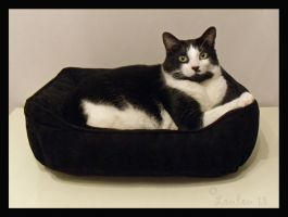Rufus Likes His New Bed by Loulou13