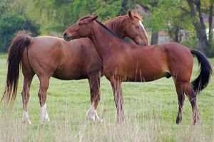 Horses greeting in color by LubelleCreativeSpark