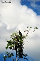 eagle and sky by tomkenar