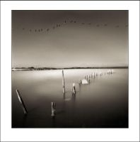 Salton Sea Birds by perry