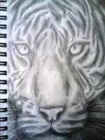 Tiger Sketch by xJRosex