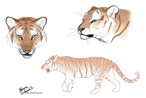 I drew some tigers. by winternacht