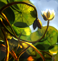150510 - Water Lilies by Jack-Kaiser