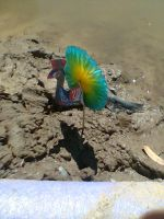 Peacock in the Mud by Darth-Sparrowhawk