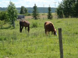 South Calgary Horses 3 by AmongTheFirst