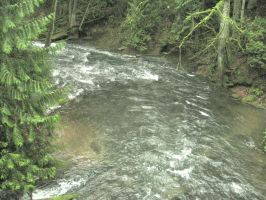 Whatcom Creek 1 by Reyphotos