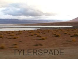 Catch Me If You Can by Tylerspade