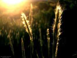 Reeds in the Wind by Sunira