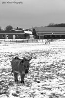 Cold Donkey by GlassHouse-1