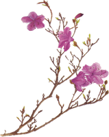 Pink Flower Png By Desperatedeceit-d30dgz2 by HpWendiz
