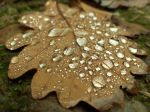 Water drops on oak leaf by MHaigh