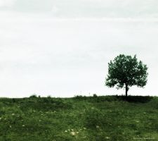 Lonely Tree 7 by Iulia-Oprinesc
