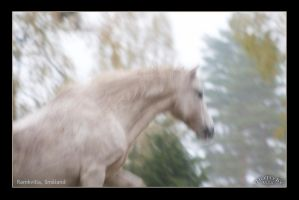 White Horse 2 by Globaludodesign
