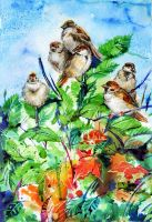 Sparrows by Jily