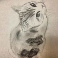 Calico Scottish-Fold Kitten Sketch by Emily-Smileyface
