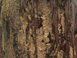 Aged Telephone Pole Texture 3 by Bound-By-Leather